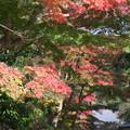 円覚寺の紅葉はグラデーションを