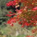 円覚寺の紅葉その1
