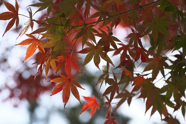円覚寺の紅葉その2