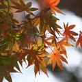 円覚寺の紅葉その3