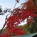 円覚寺前の紅葉