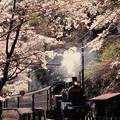 桜咲く神尾駅を通過するC12 164
