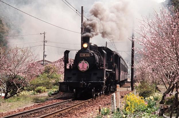 Photos: 19980329C5644@笹間渡