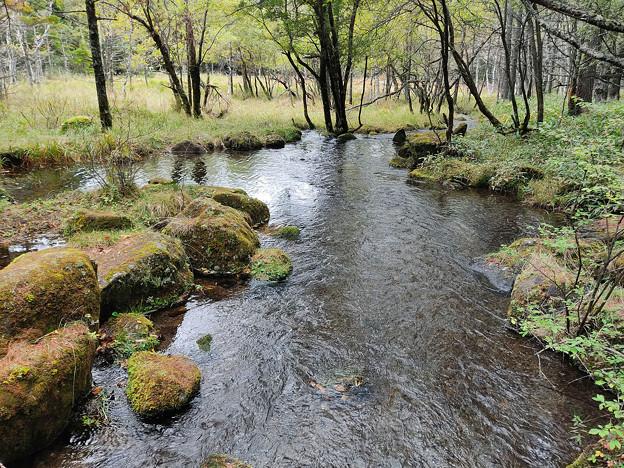 湿原の流れ