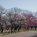 Photos: 09府中市郷土の森【梅園の眺め】8