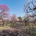Photos: 07府中市郷土の森【梅園の眺め】6