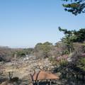 Photos: 02大倉山梅林【梅林の眺め】2