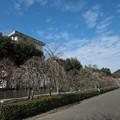 Photos: 01大船フラワーセンター【梅園の眺め】1