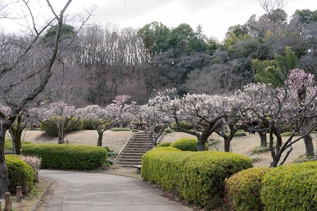 01薬師池公園【梅林の眺め】1