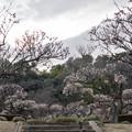 02薬師池公園【梅林の眺め】2