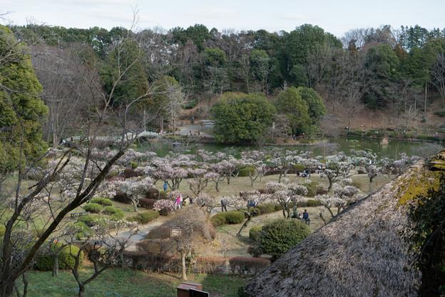 08薬師池公園【薬師池と梅】1