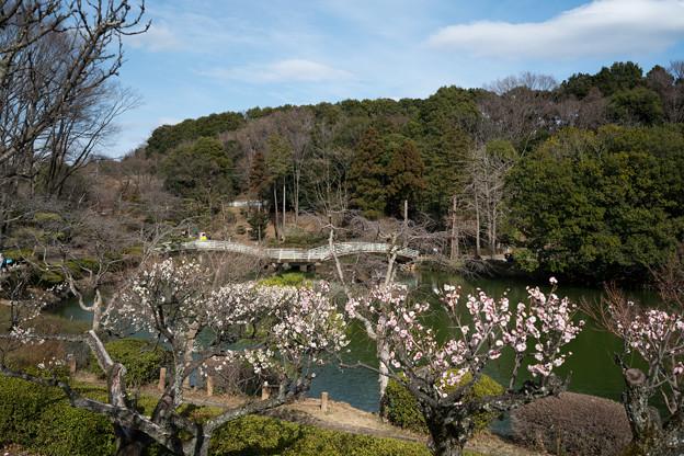 13薬師池公園【薬師池と梅】6
