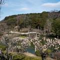 Photos: 13薬師池公園【薬師池と梅】6