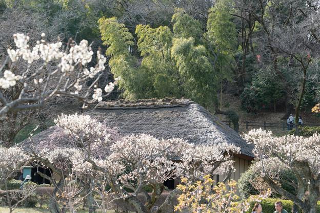 17薬師池公園【旧永井家と梅】3