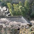 Photos: 17薬師池公園【旧永井家と梅】3