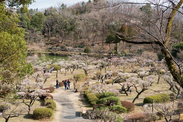 09薬師池公園【薬師池と梅】2