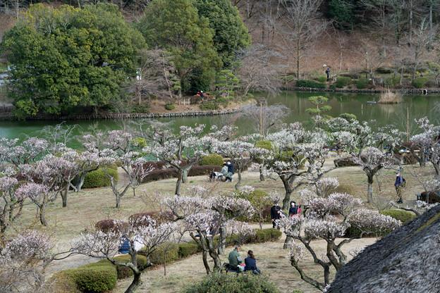 10薬師池公園【薬師池と梅】3
