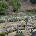 Photos: 10薬師池公園【薬師池と梅】3