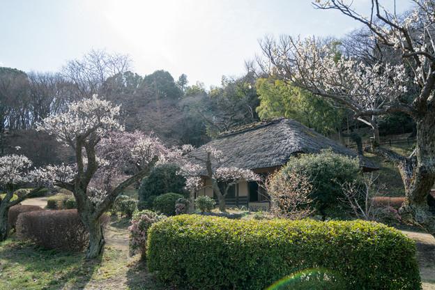 16薬師池公園【旧永井家と梅】2