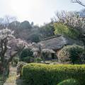 Photos: 16薬師池公園【旧永井家と梅】2