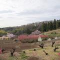 Photos: 02花桃の丘【ハナモモの眺め】2