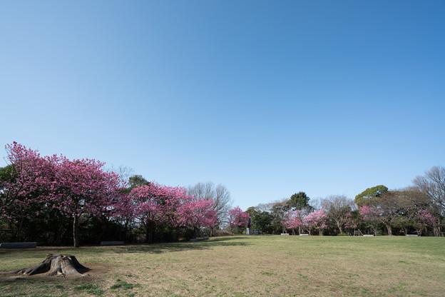 02本牧山頂公園【公園の眺め】2