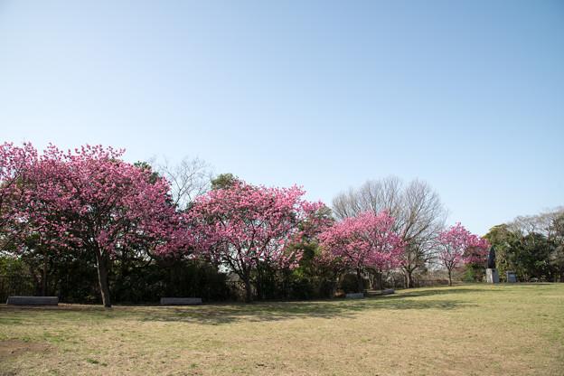 03本牧山頂公園【公園の眺め】3