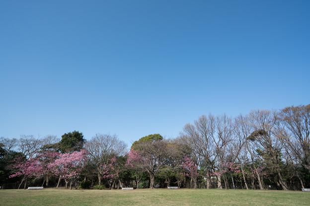 04本牧山頂公園【公園の眺め】4