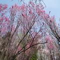 05城山かたくりの里【ほうき桃の園】5