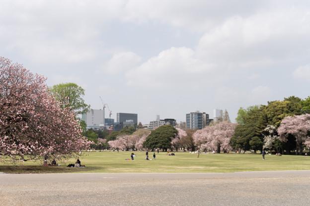 02新宿御苑の桜【苑内の眺め】2