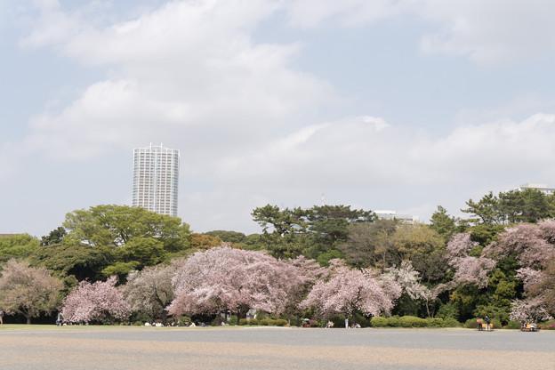 03新宿御苑の桜【苑内の眺め】3