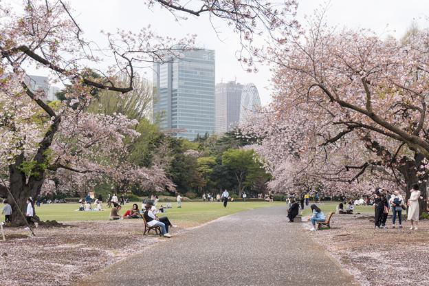 06新宿御苑の桜【苑内の眺め】6