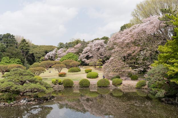 07新宿御苑の桜【苑内の眺め】7
