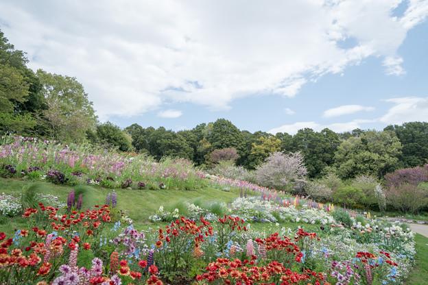 04里山ガーデン【大花壇の眺望】1