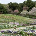 07里山ガーデン【大花壇の眺望】4