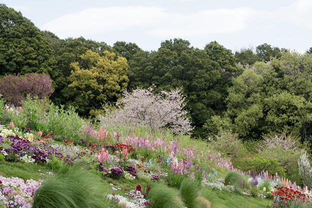 08里山ガーデン【大花壇の眺望】5