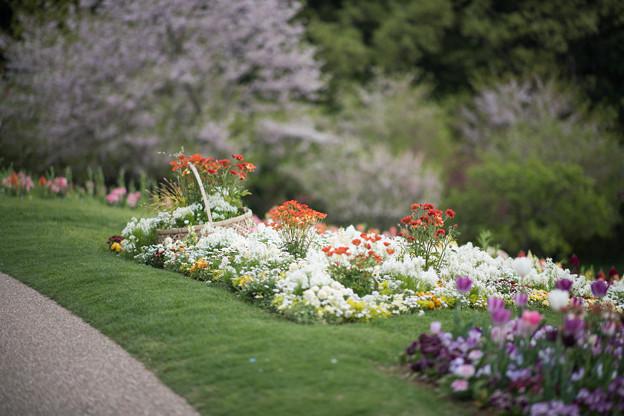 11里山ガーデン【花壇の様子】1