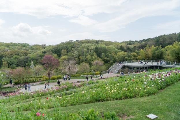10里山ガーデン【大花壇の眺望】7