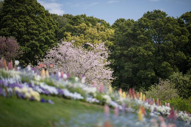 13里山ガーデン【花壇の様子】3