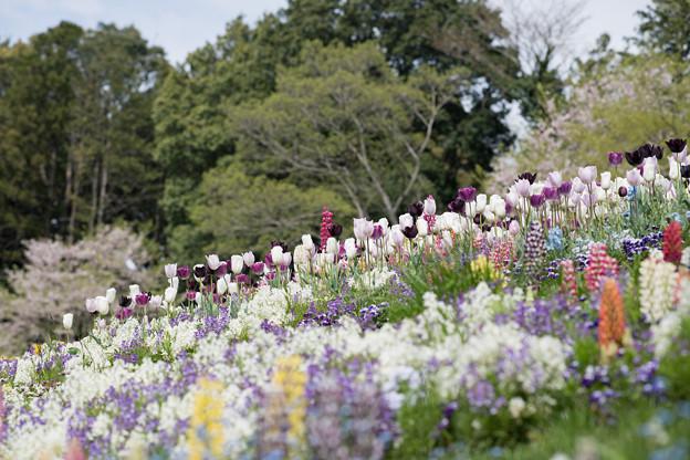14里山ガーデン【花壇の様子】4