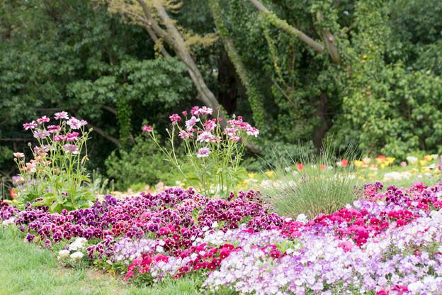 15里山ガーデン【花壇の様子】5