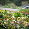 17里山ガーデン【花壇の様子】7