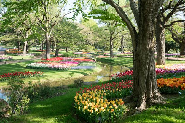 07昭和記念公園【渓流広場の眺め】7