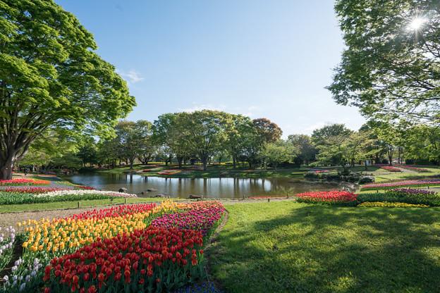 01昭和記念公園【渓流広場の眺め】1
