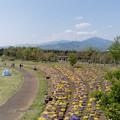 02花菜ガーデン【広場の眺め】2