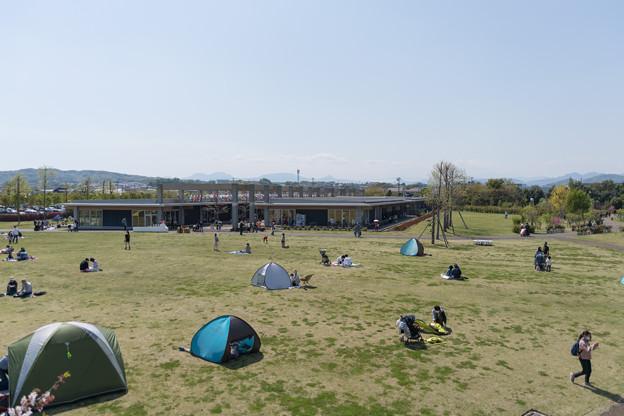 01花菜ガーデン【広場の眺め】1
