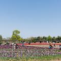 03花菜ガーデン【チューリップ畑の眺め】