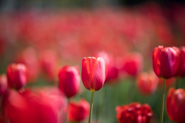 04花菜ガーデン【Nikkor105mm_f1.4】