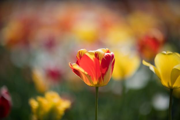 06花菜ガーデン【Nikkor105mm_f1.4】
