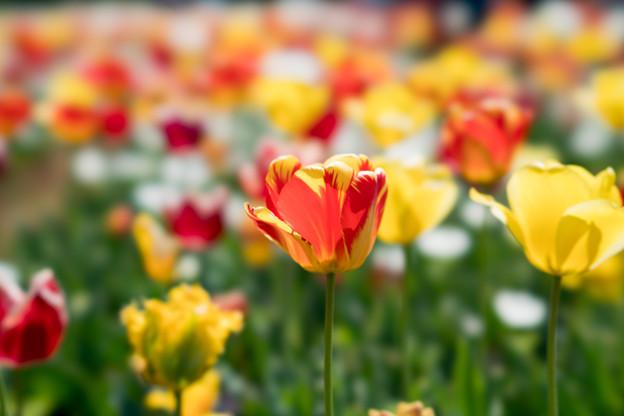 07花菜ガーデン【FE100mmf2.8】
